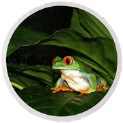 Red Eyed Green Tree Frog Round Beach Towel