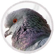 Red-eyed Pigeon Round Beach Towel