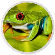 Red-eyed Treefrog Round Beach Towel