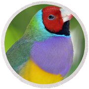 Red Faced Gouldian Finch Round Beach Towel
