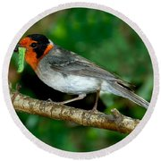 Red-faced Warbler With Caterpillar Round Beach Towel