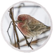 Red Finch Round Beach Towel