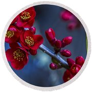 Red Flowering Quince Round Beach Towel