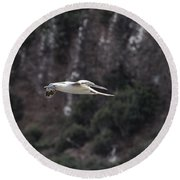 Red Footed Booby In Flight Round Beach Towel
