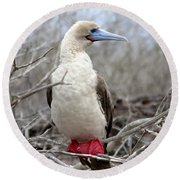 Red-footed Booby Round Beach Towel