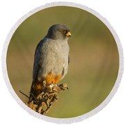 Red Footed Falcon Falco Vespertinus 4 Round Beach Towel