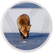 Red Fox Crossing A Frozen Lake Round Beach Towel