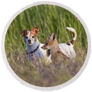 Red Fox Cub With Jack Russel Round Beach Towel