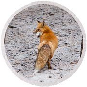 Red Fox Egg Thief Round Beach Towel