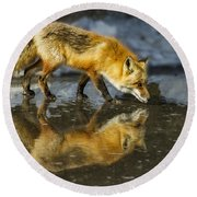 Red Fox Has A Drink Round Beach Towel
