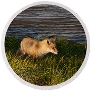 Red Fox Hunting The Edges At Sunset Round Beach Towel