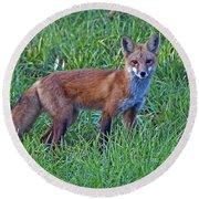 Red Fox In A Field Round Beach Towel