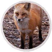 Red Fox In Prospect Park Round Beach Towel