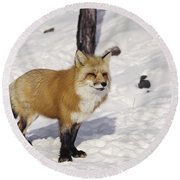 Red Fox In The Snow Round Beach Towel