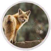 Red Fox In The Sunset Round Beach Towel