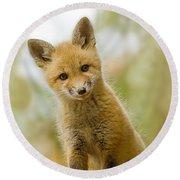 Red Fox Kit Up Close Round Beach Towel