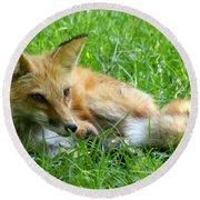 Red Fox Resting Round Beach Towel