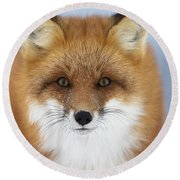 Red Fox Staring At The Camerachurchill Round Beach Towel