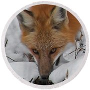 Red Fox Upclose Round Beach Towel
