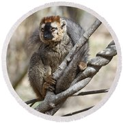 Red-fronted Lemur  Eulemur Rufifrons Round Beach Towel