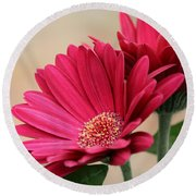 Red Gerber Daisies Round Beach Towel