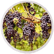 Red Grapes In Vineyard Round Beach Towel