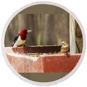 Red-headed Woodpecker Feeding Round Beach Towel