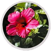 Red Hibiscus Round Beach Towel by Robert Bales
