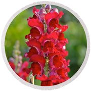 Red Snapdragon Round Beach Towel