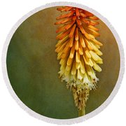 Red Hot Poker Round Beach Towel