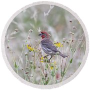 Red House Finch In Flowers Round Beach Towel