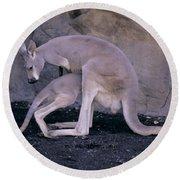 Red Kangaroo. Australia Round Beach Towel