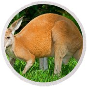 Red Kangaroo Round Beach Towel