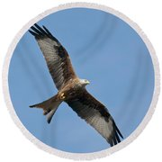 Red Kite In Flight Round Beach Towel