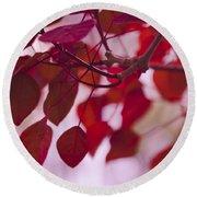 Red Leaves - Euphorbia Cotinifolia - Tropical Smoke Bush Round Beach Towel