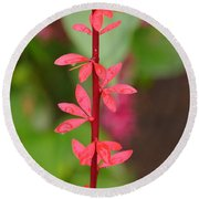 Red Leaves2 Round Beach Towel