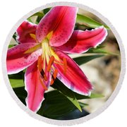 Red Lilly 8095 Round Beach Towel