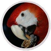 Red Macaw Round Beach Towel
