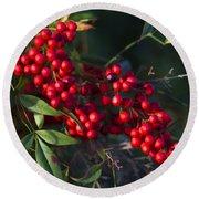 Red Nandina Berries - The Heavenly Bamboo Round Beach Towel