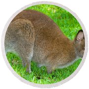 Red Necked Wallaby Round Beach Towel