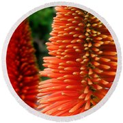 Red-orange Flower Of Eremurus Ruiter-hybride Round Beach Towel