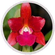 Red Orchid Round Beach Towel