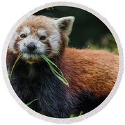 Red Panda With An Attitude Round Beach Towel
