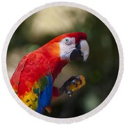 Red Parrot  Round Beach Towel