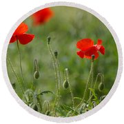 Red Poppies 2 Round Beach Towel