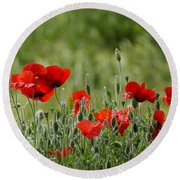 Red Poppies 3 Round Beach Towel