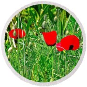 Red Poppies Near Meryem Ana Evi-cottage Believed To Be Mary's Last Home-turkey Round Beach Towel