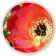 Red Prickly Pear Blossom Round Beach Towel