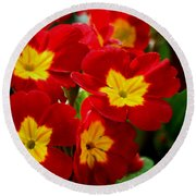 Red Primroses Round Beach Towel