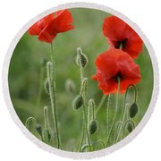 Red Red Poppies 1 Round Beach Towel